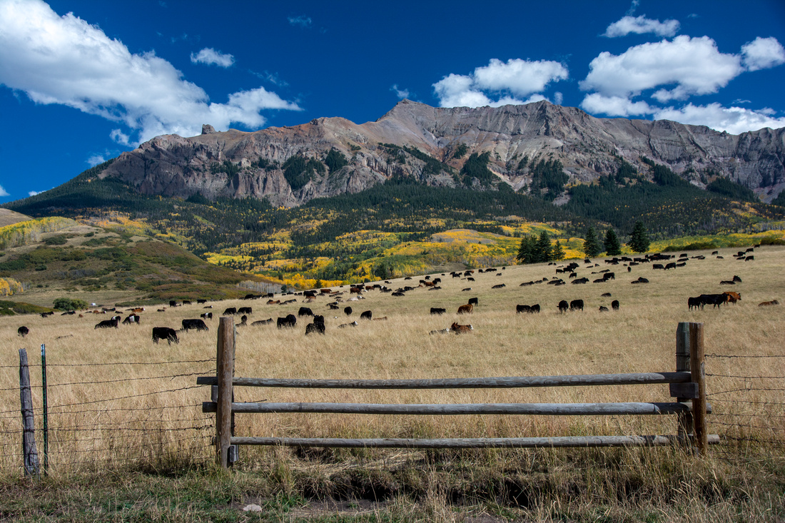 Cattle Ranch on Last Dollar Mountain