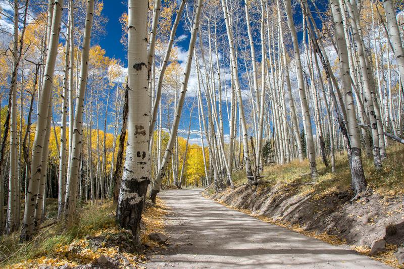 Last Dollar Road Aspen grove