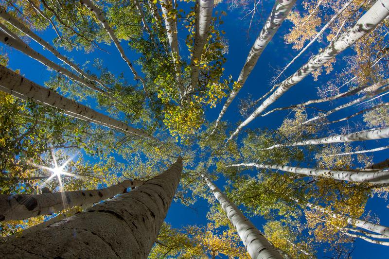 Sun in the Aspen grove