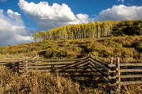 Fences and Aspens