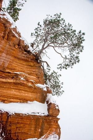 Tree on Sandstone